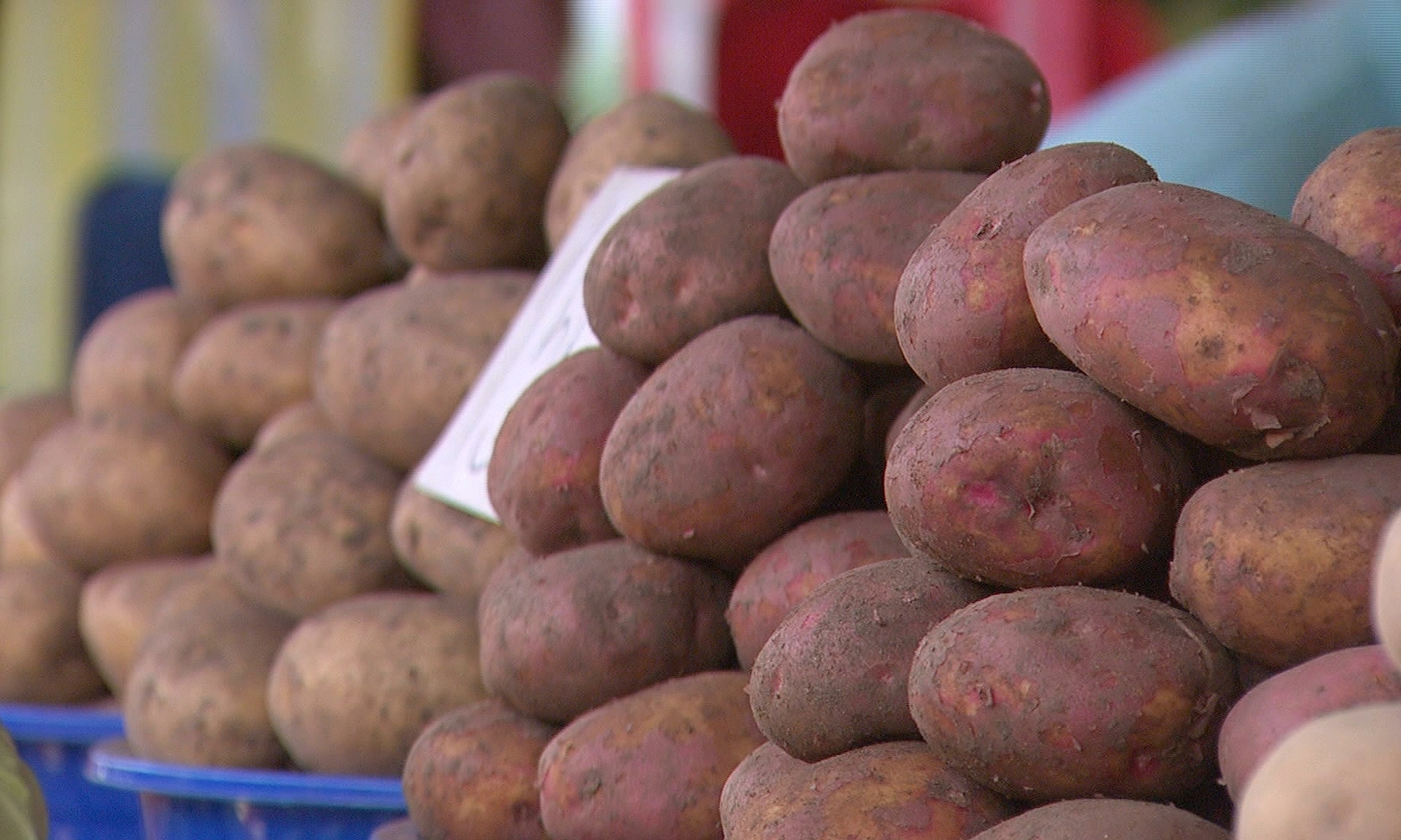 Урожай картофеля в Пакистане