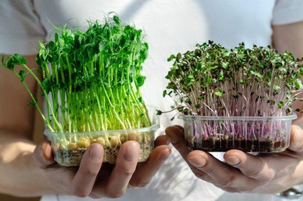 Руккола – Редис – Брокколи. Семена, коврики, многоразовые ёмкости. 6 полноценных урожаев