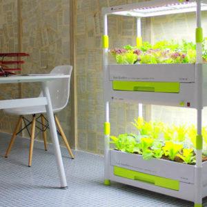 Домашний сад с верхней досветкой