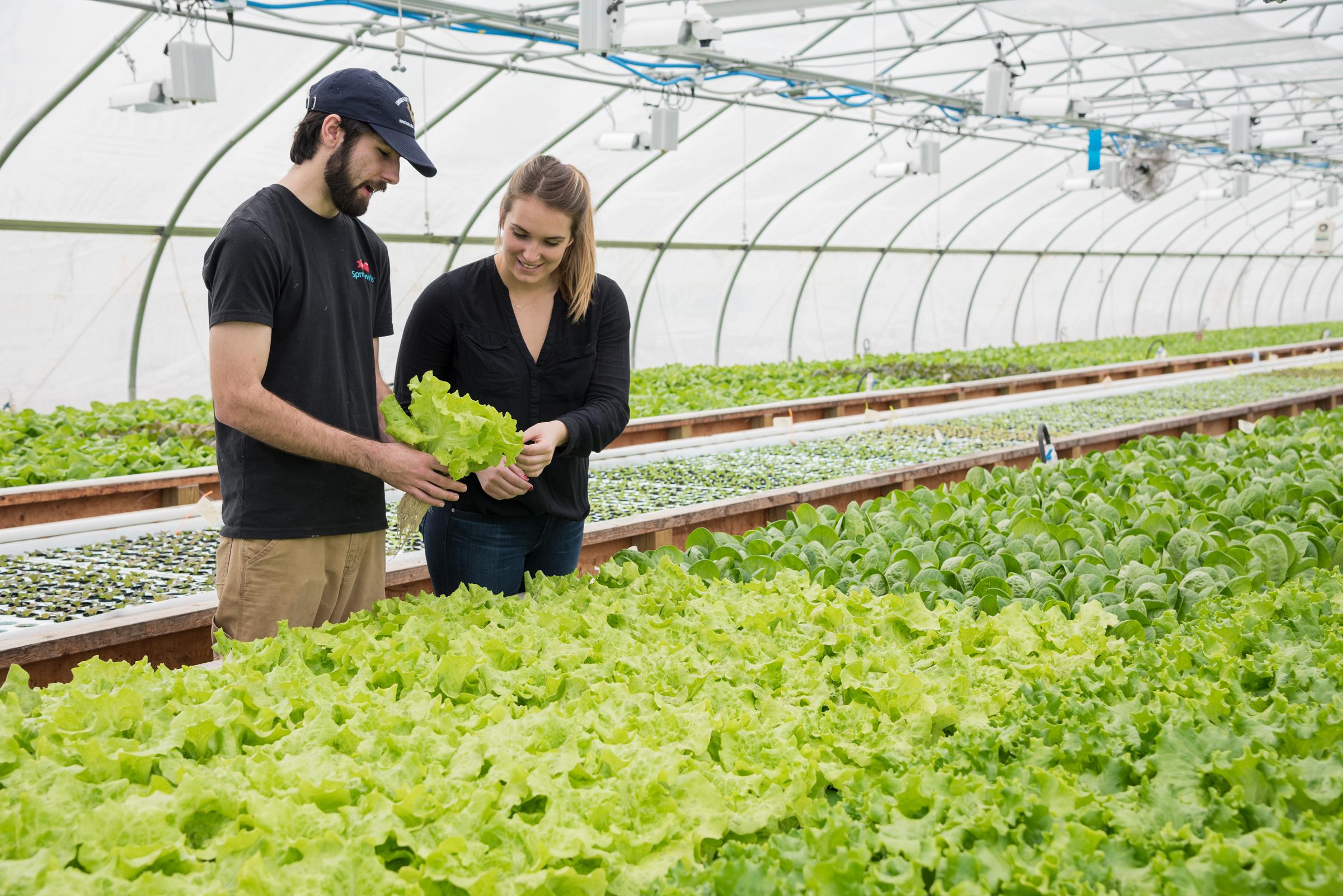 Фермер-аквапоник Тревор Кенкель выращивает сельскохозяйственные культуры, которые имеют большой спрос