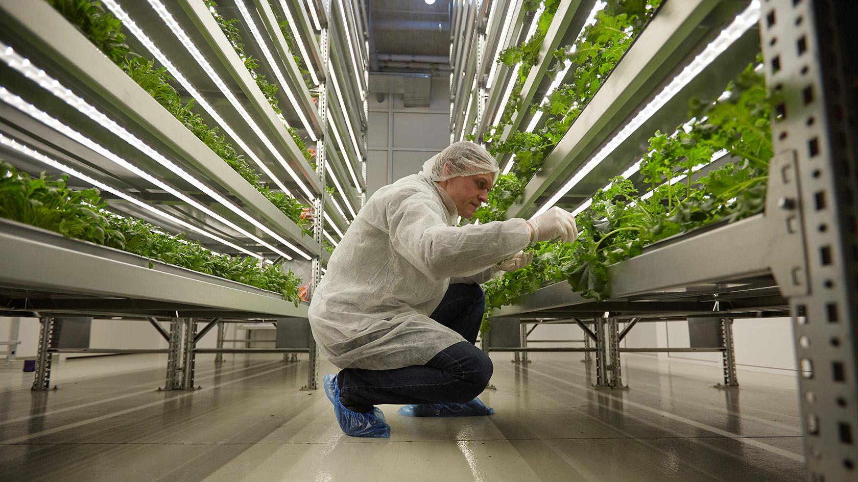 Finn Farms начинает производство на Babcock Ranch