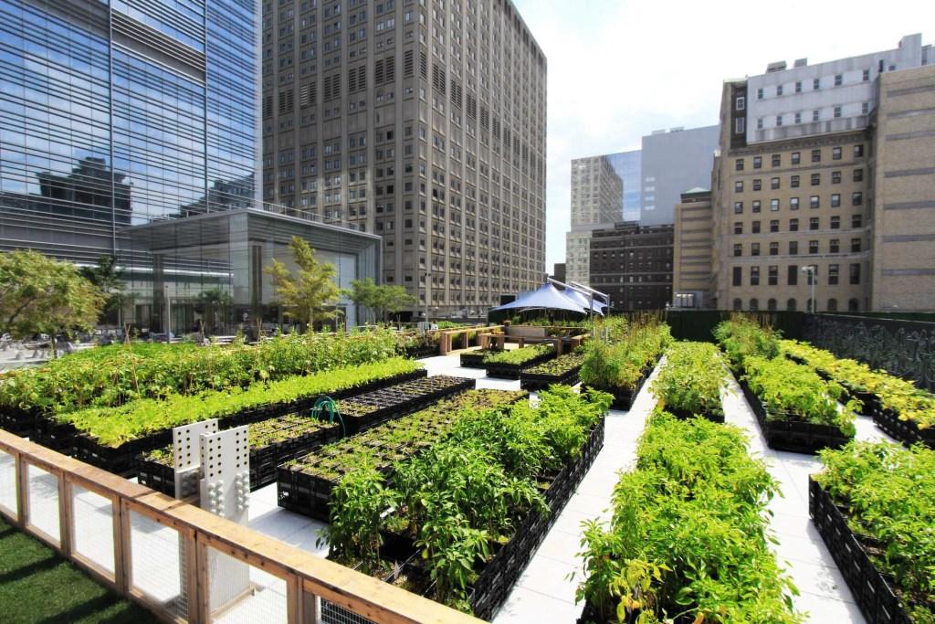 Городское садоводство: трансформация наших городов с серого на зеленый