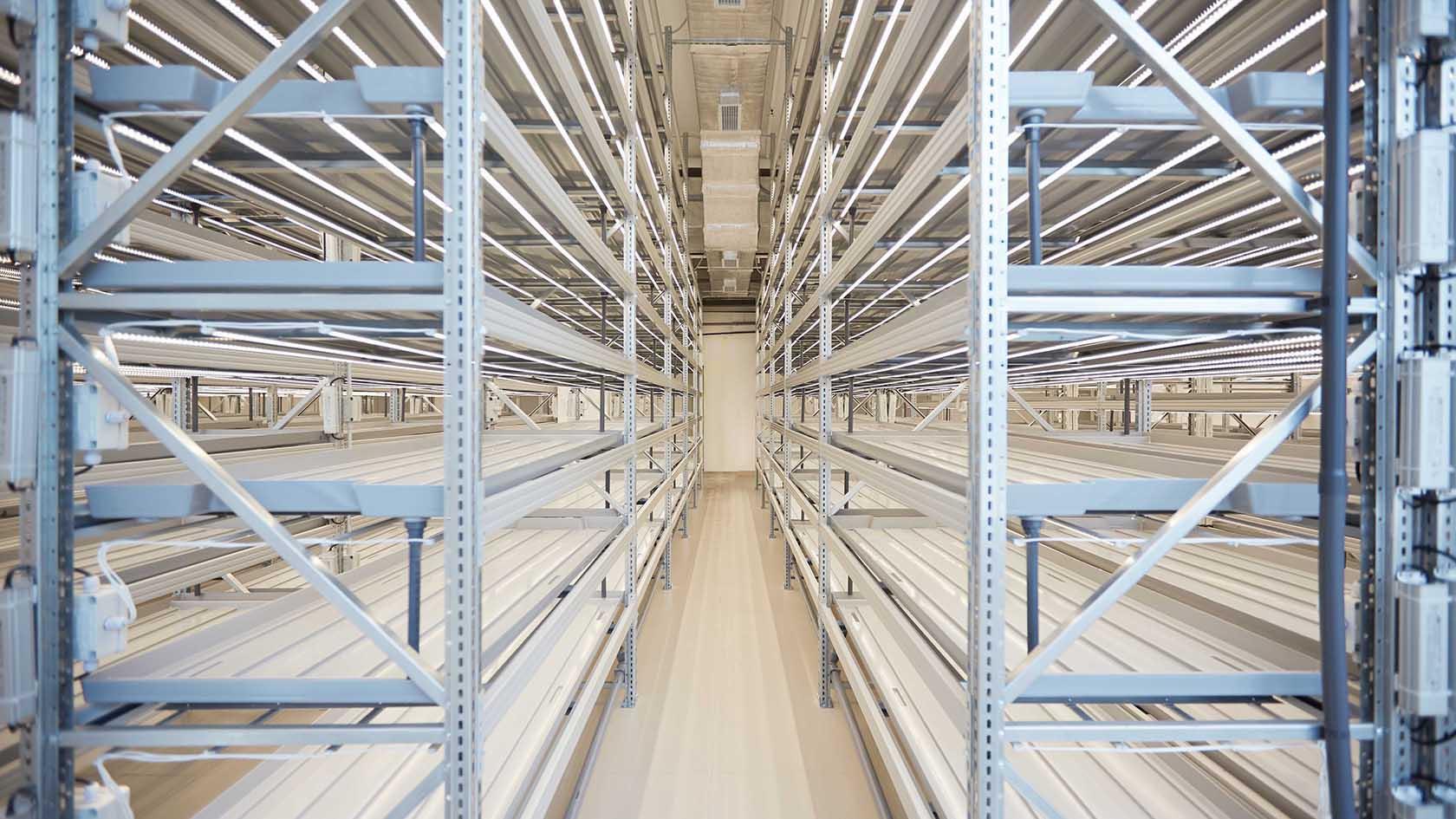 Катар: Объединение усилий для управления коммерческими вертикальными фермами в помещении