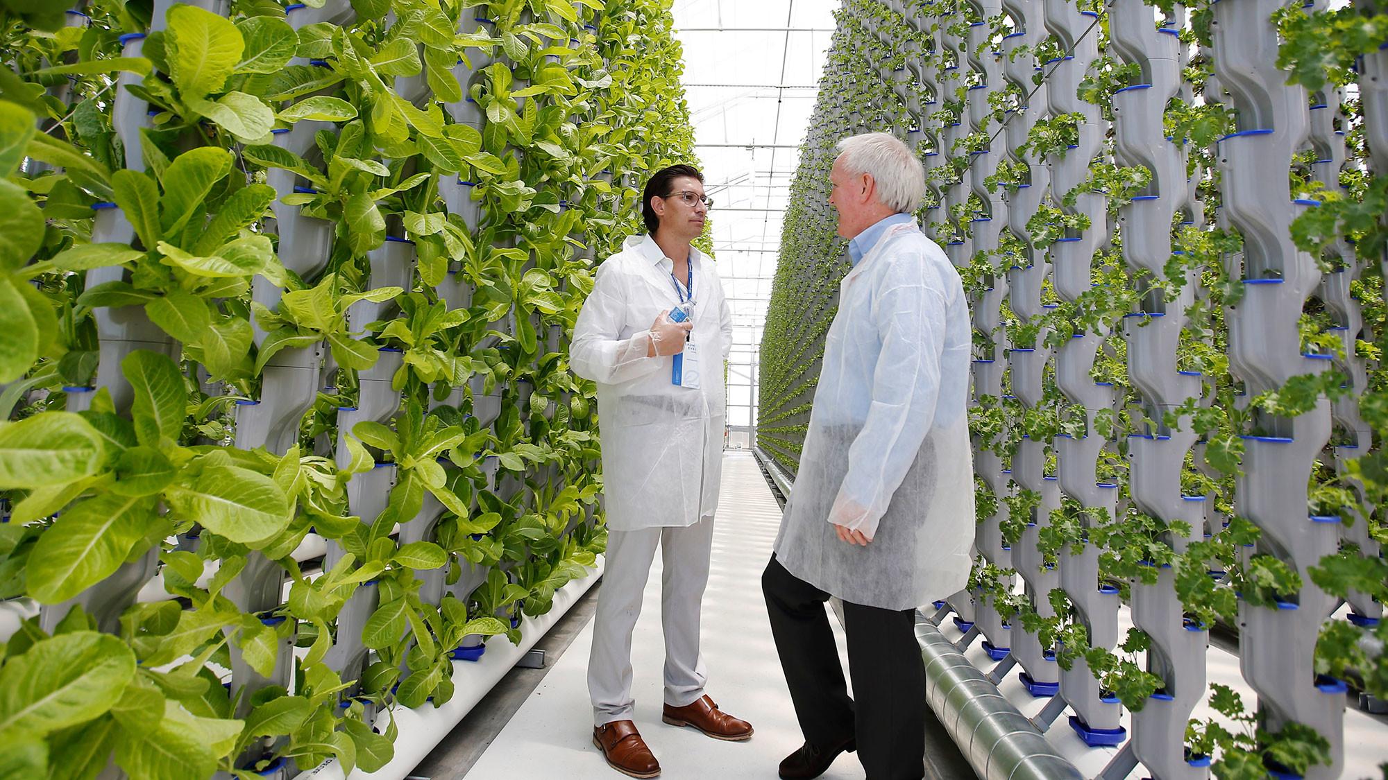 Urban Greening Camp в Лейпциге для защиты видов растений, Cleantech, Greentech и вертикальное сельское хозяйство