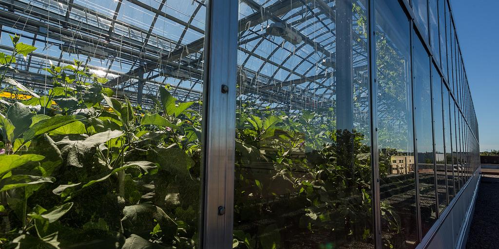 GoodLeaf Farms открыта в Квебеке