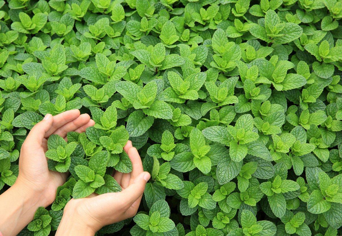 15 Лучших растений для аквапоники