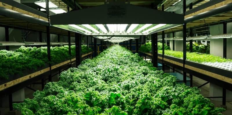 Округ Делавэр продвигает вертикальную сельскохозяйственную компанию