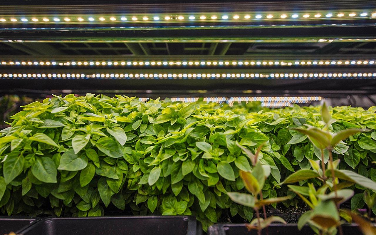 Компания Fluence запускает модульную систему RAZR для поддержки земледелия