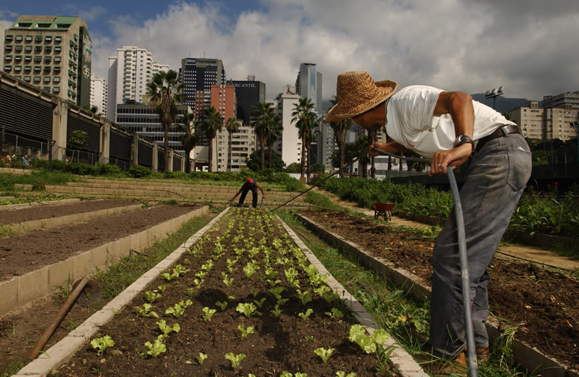 Почему рост городского сельского хозяйства во время пандемии - перспективный тренд?