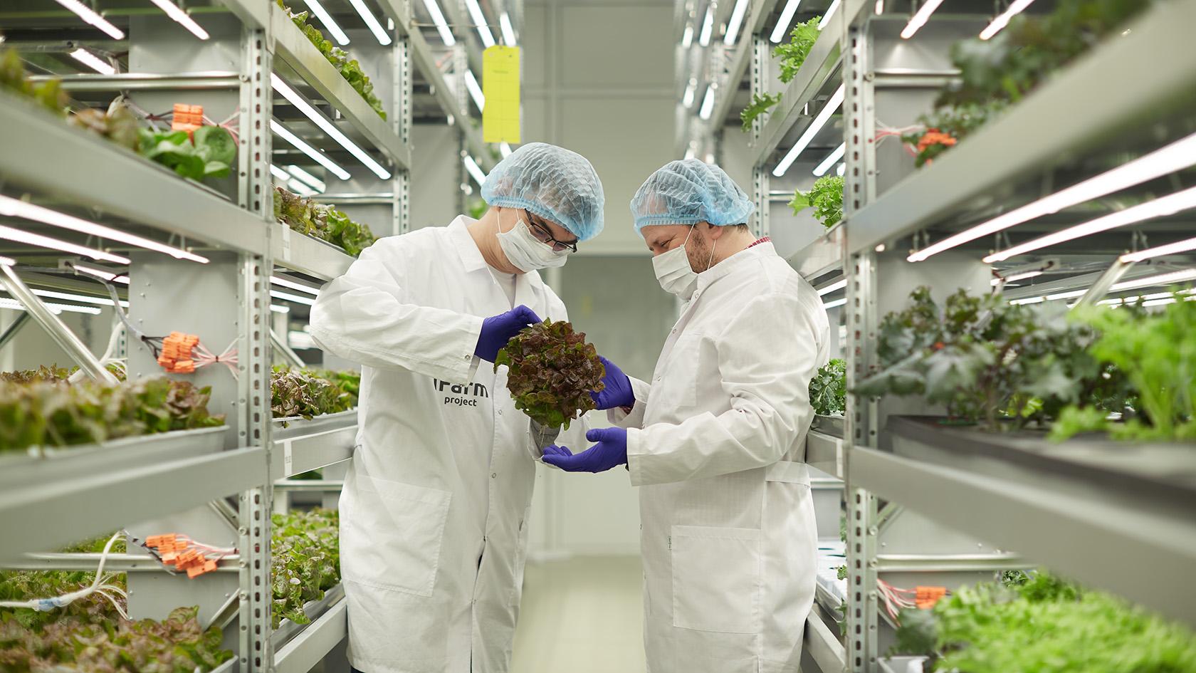 Польза от бактерий на вертикальной ферме