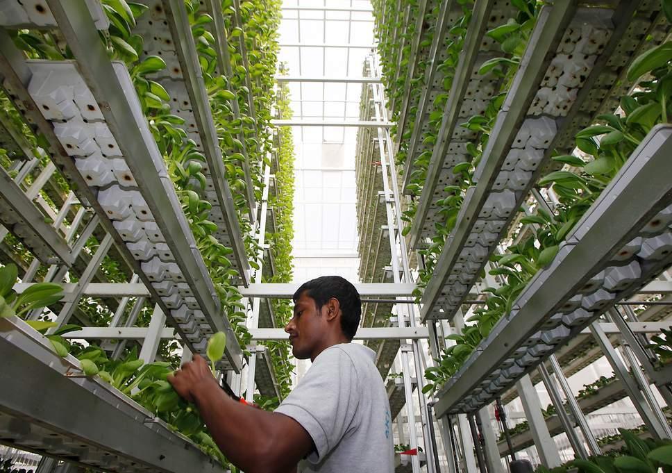 Расширение технологий вертикального земледелия станет ключом в борьбе с нехваткой воды