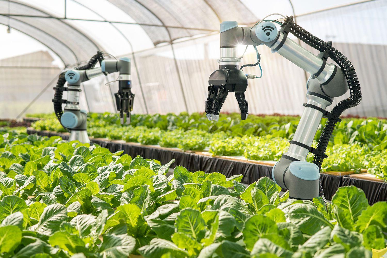 Роботы переводят вертикальное фермерство на новый уровень