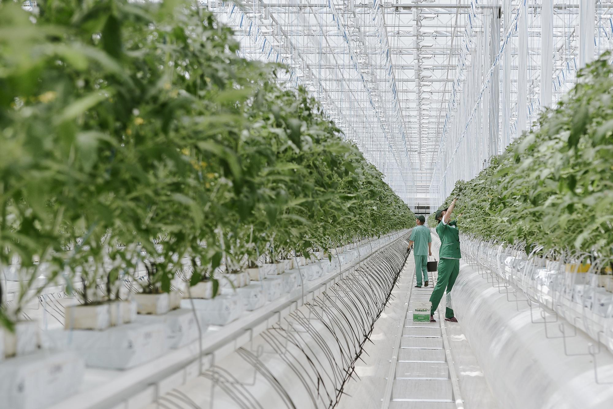 Теплицы и вертикальное земледелие