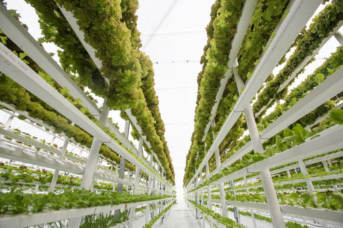 Вертикальная ферма приходит в Эйвондейл