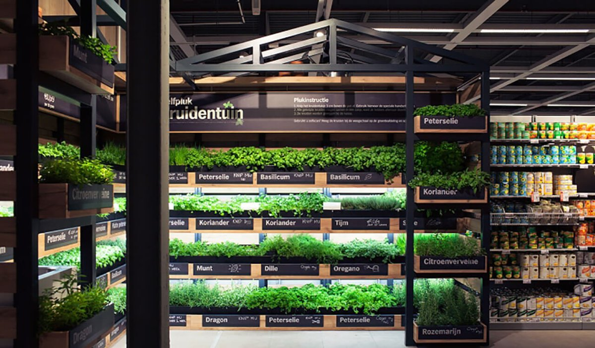 Голландская вертикальная ферма тестирует свежие травы в супермаркетах