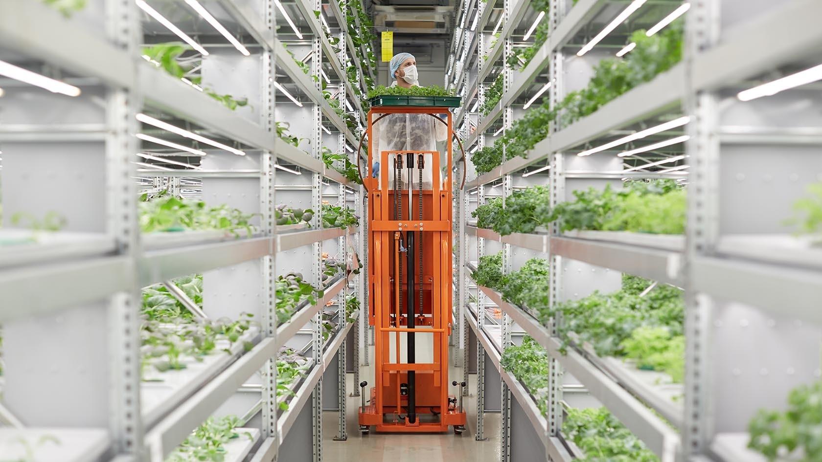 Большие автоматизированные инвестиции в вертикальные фермы