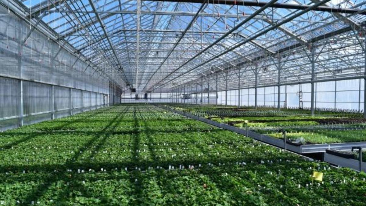 VetaNova приобрела тепличный комплекс площадью 157 акров в Колорадо