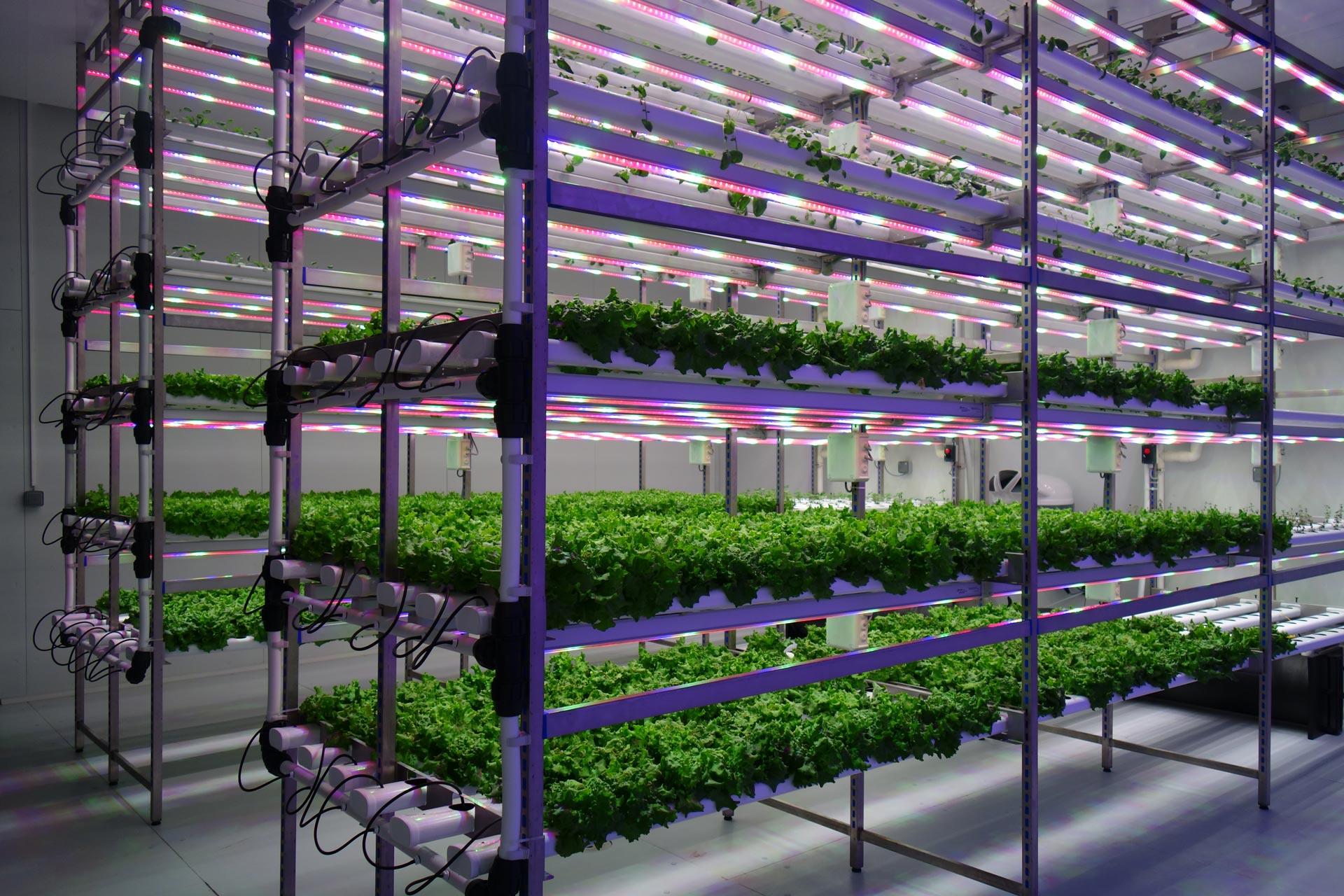 Государственный институт виноградарства и садоводства занимается перспективными концепциями
