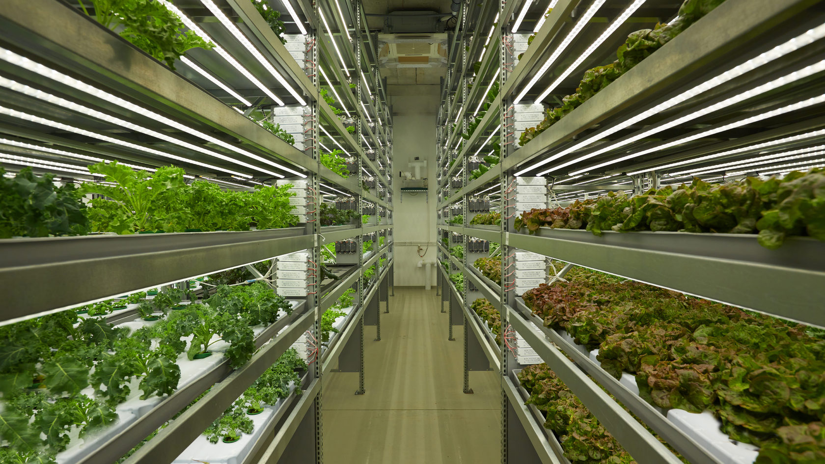 В Грузии осуществлён запуск вертикальной фермы