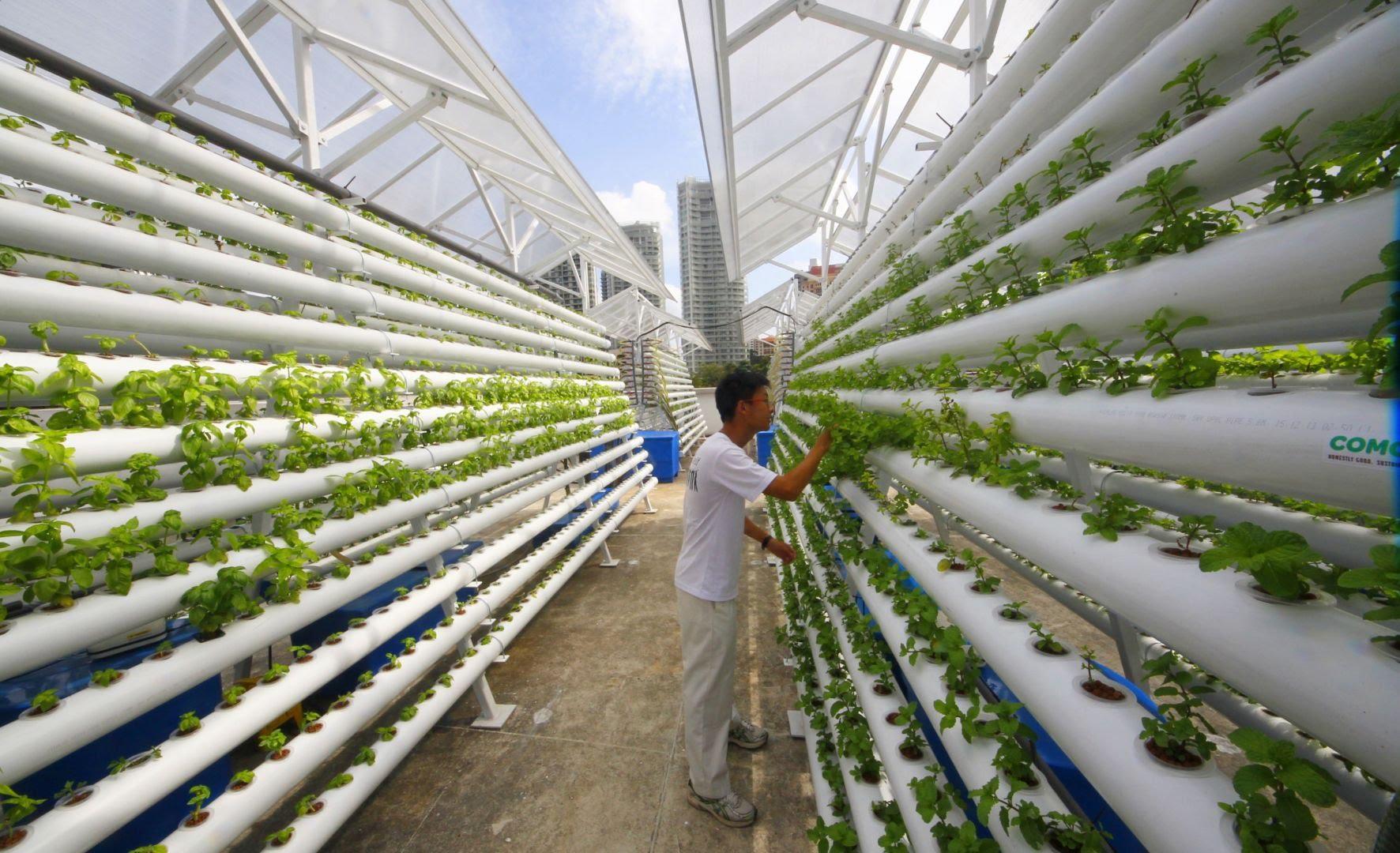 DLG и Ассоциация вертикального земледелия (AVF) начинают сотрудничество