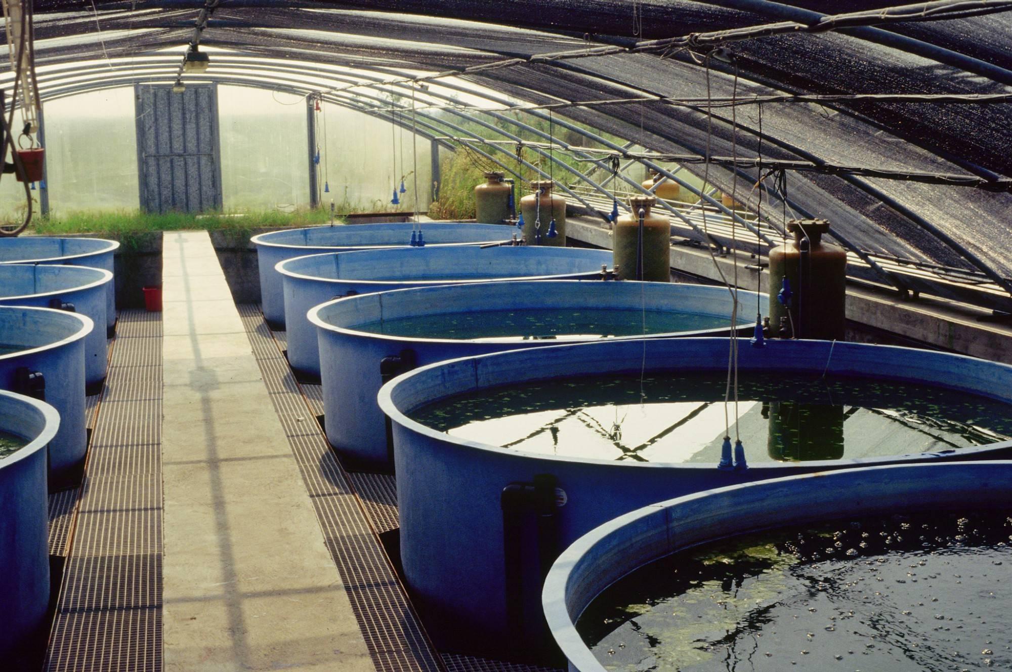Большие надежды на систему аквапоники, которая очищает сточные воды