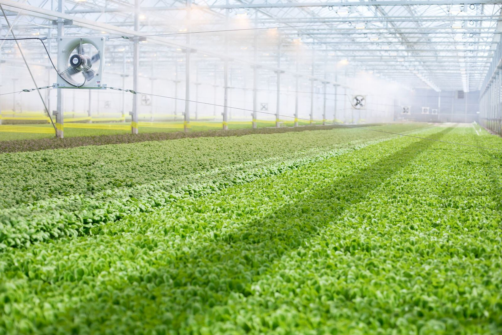 BrightFarms модель внутреннего земледелия обеспечивает большой рост