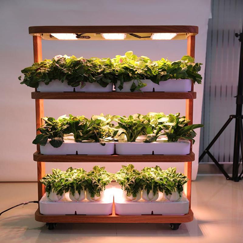 Гидропонный сад помогает расширить рацион питания жителей О-Клэр