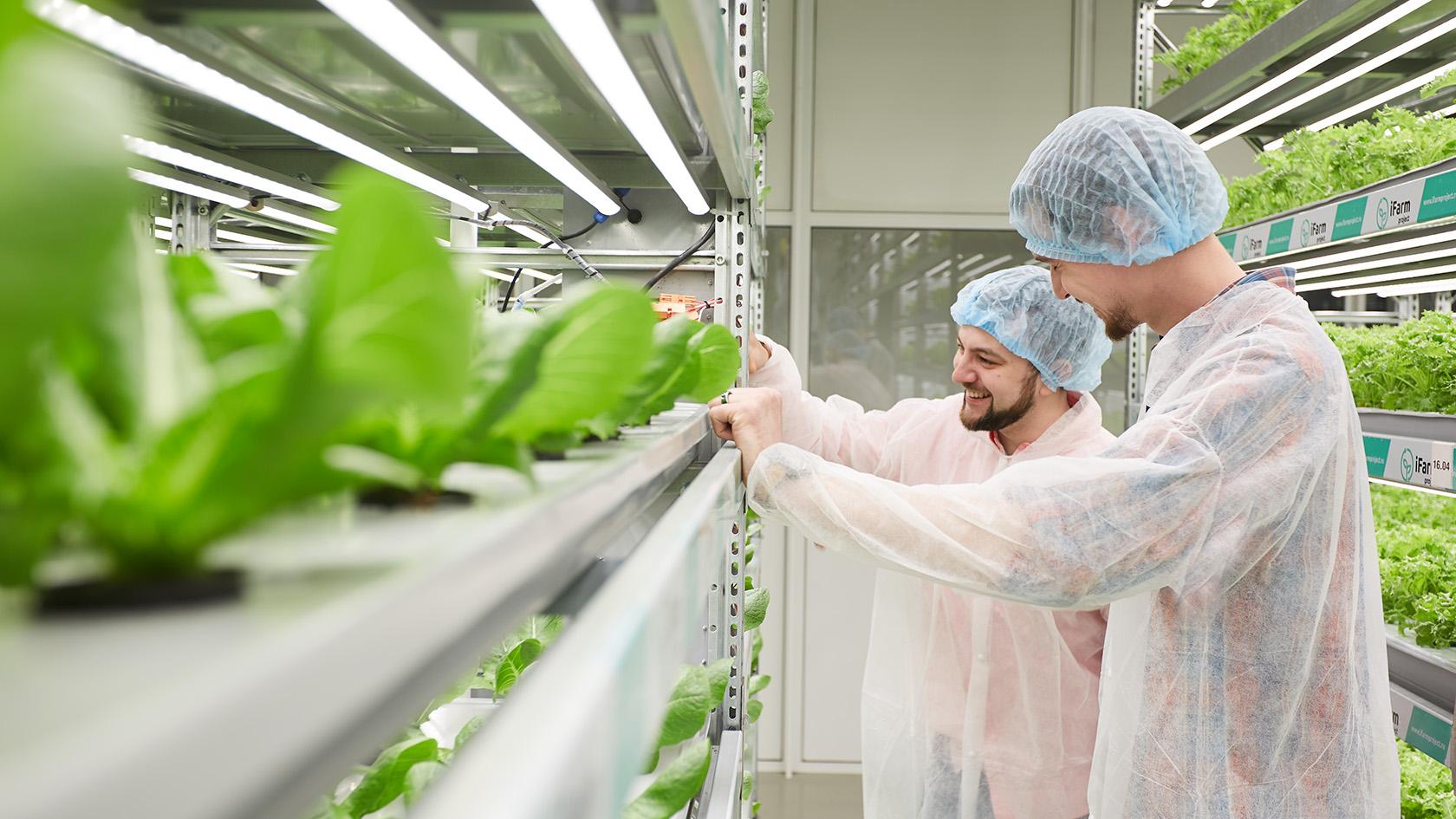 Vertical farming: как открыть и управлять вертикальной фермой