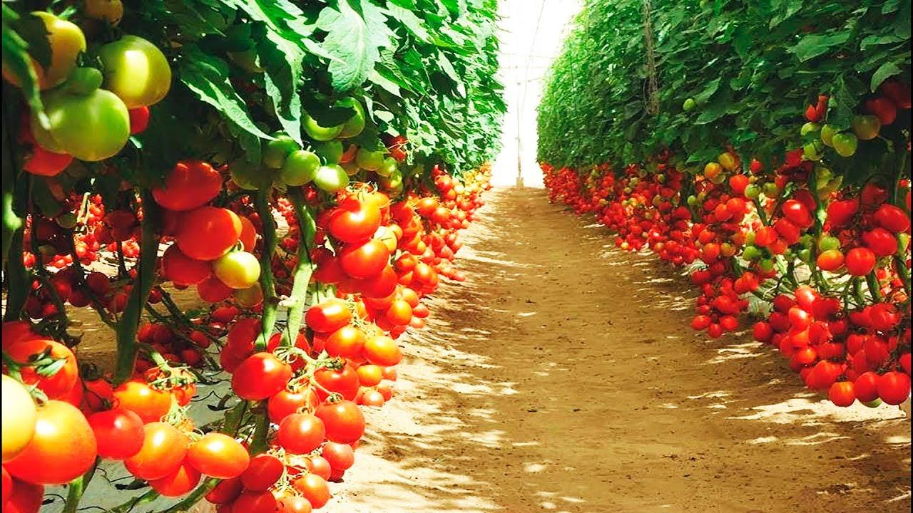 Kawamata Farms включена в программу развития сельского хозяйства на Гавайях