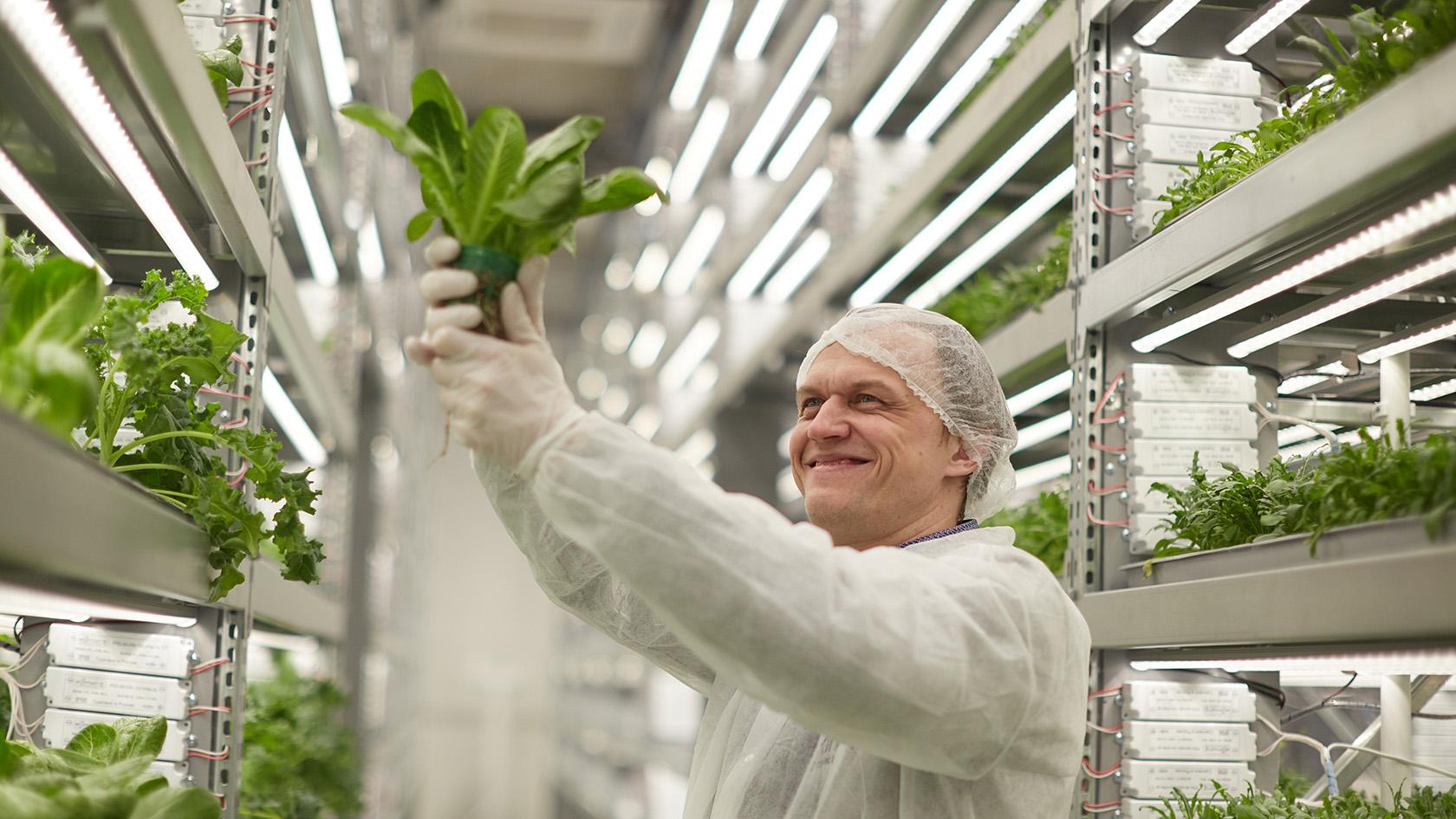 Выбор площадки для вертикального фермерства