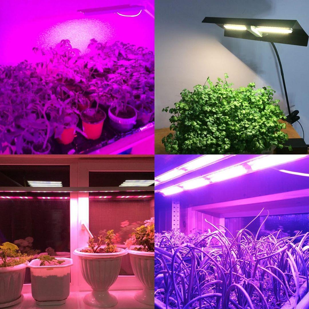 Лучшие фитосветильники для выращивания трав или фруктового сада в домашних условиях