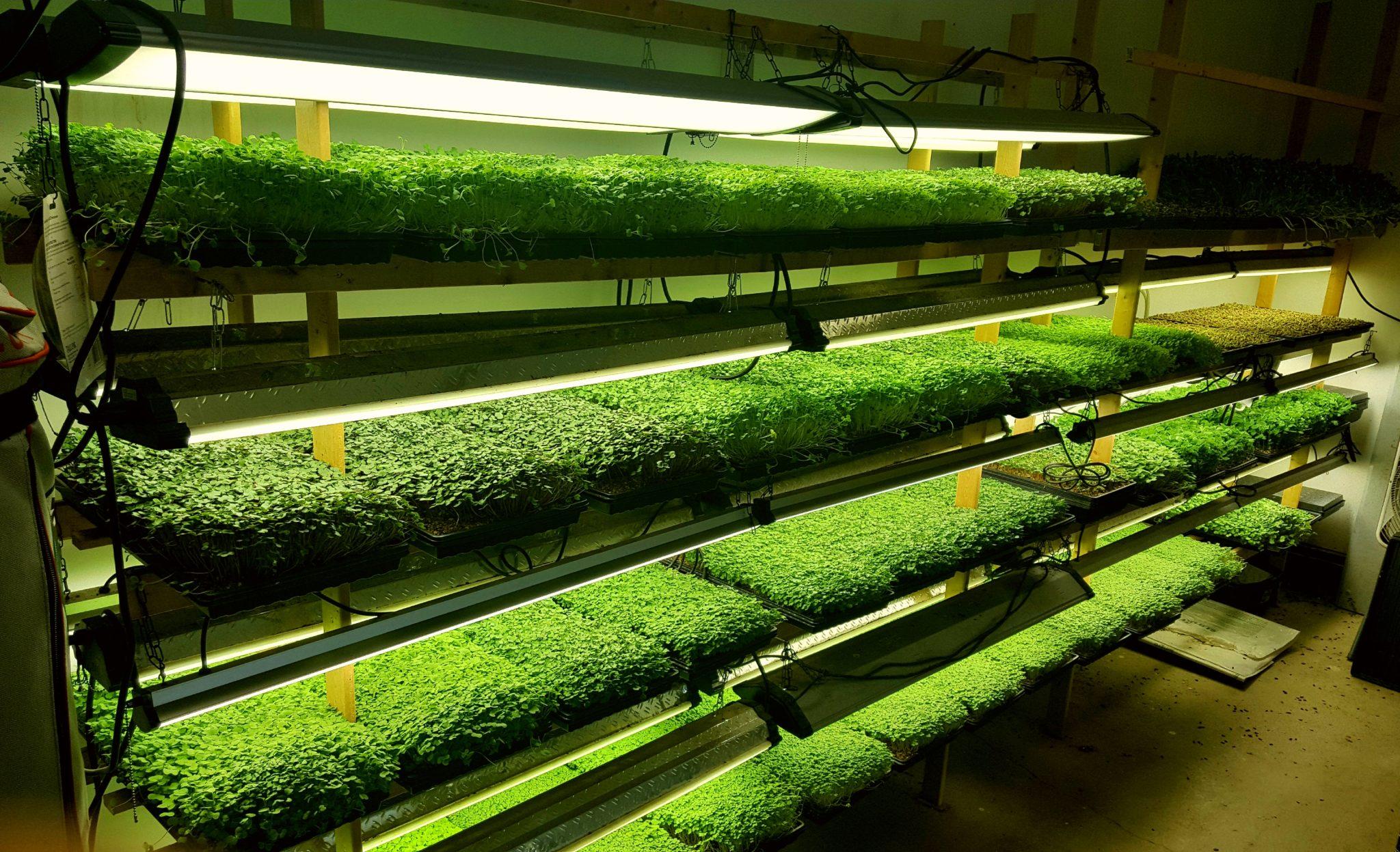 Компания Microgreen привлекает инвестиции