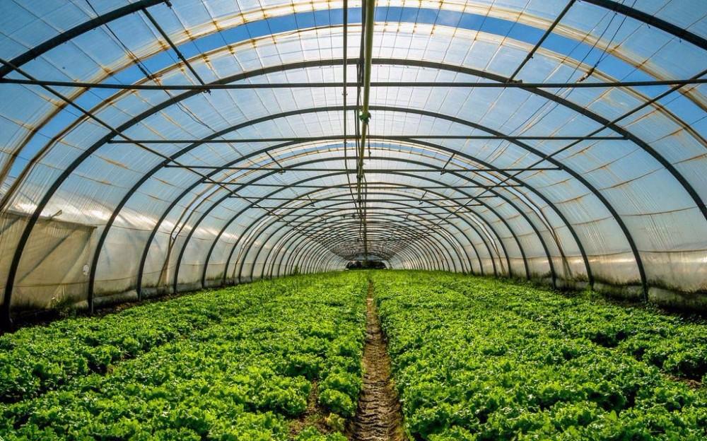 Динамика и устойчивость в сельском хозяйстве Греции