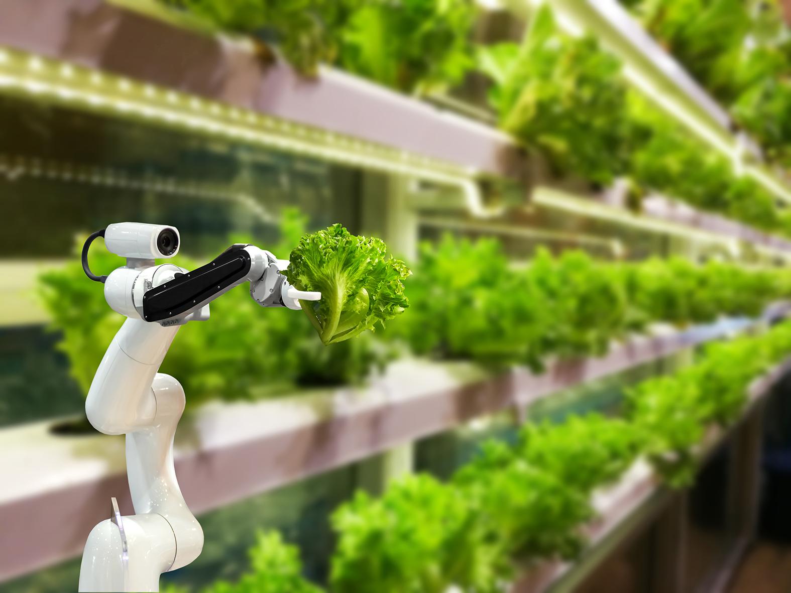 Новые тенденции в вертикальном земледелии, которые определят будущее с/х