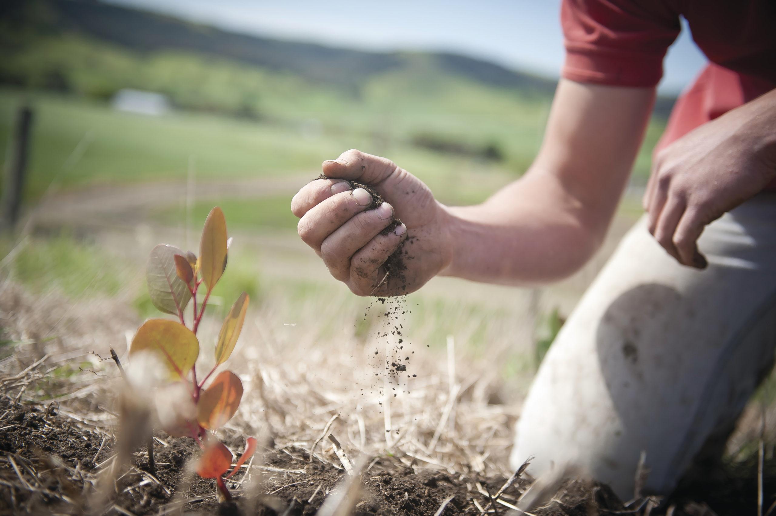 Вертикальные фермеры и органические земледельцы в противостоянии