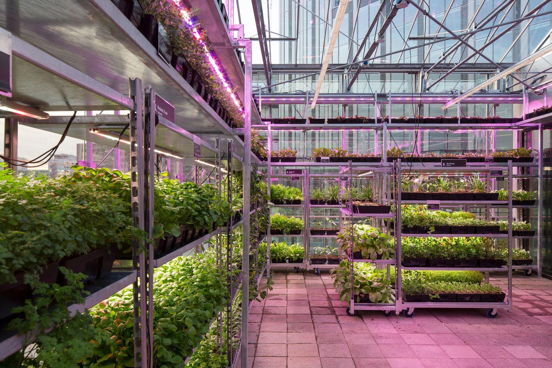 Рестораны и розничные торговцы обращаются к вертикальным фермам