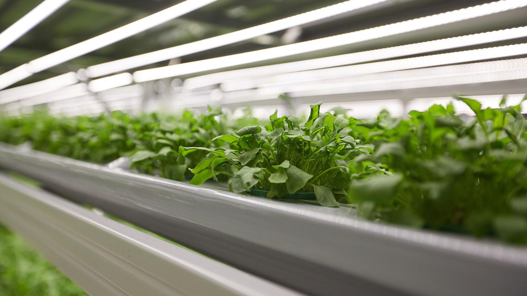 Гидропонная ферма и магазин открываются в Бирмингеме