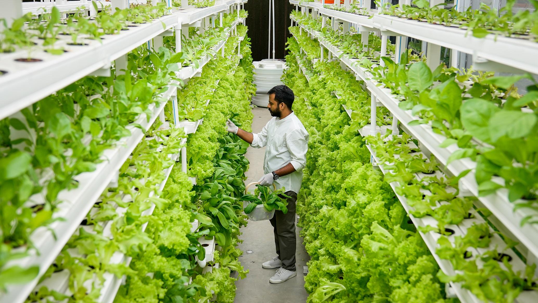 Технология вертикального земледелия