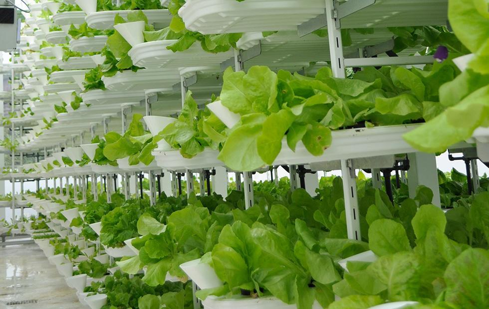 Интеллектуальное вертикальное сельское хозяйство
