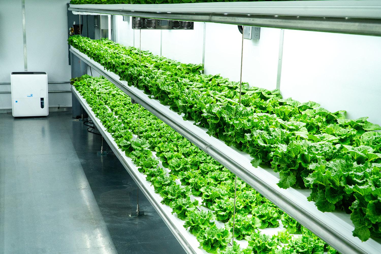 Являются ли вертикальные сады будущим сельского хозяйства в Африке?