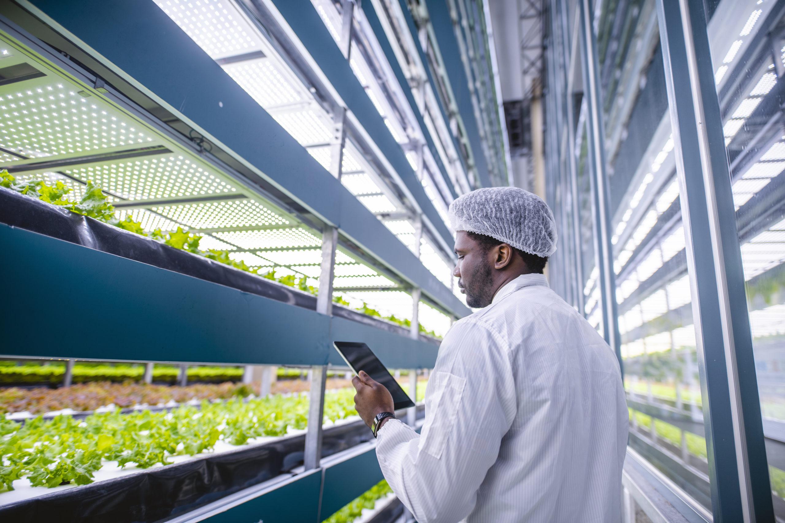 Выращивают растения на гидропонных установках