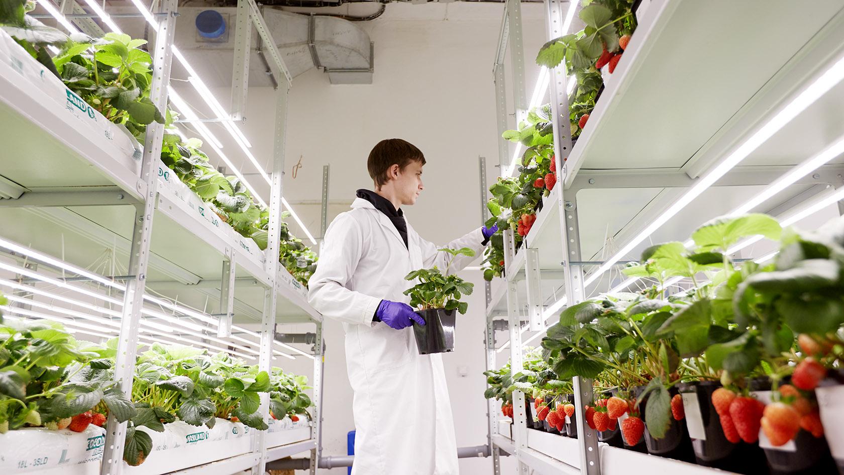 Могут ли вертикальные фермы быть прибыльными?
