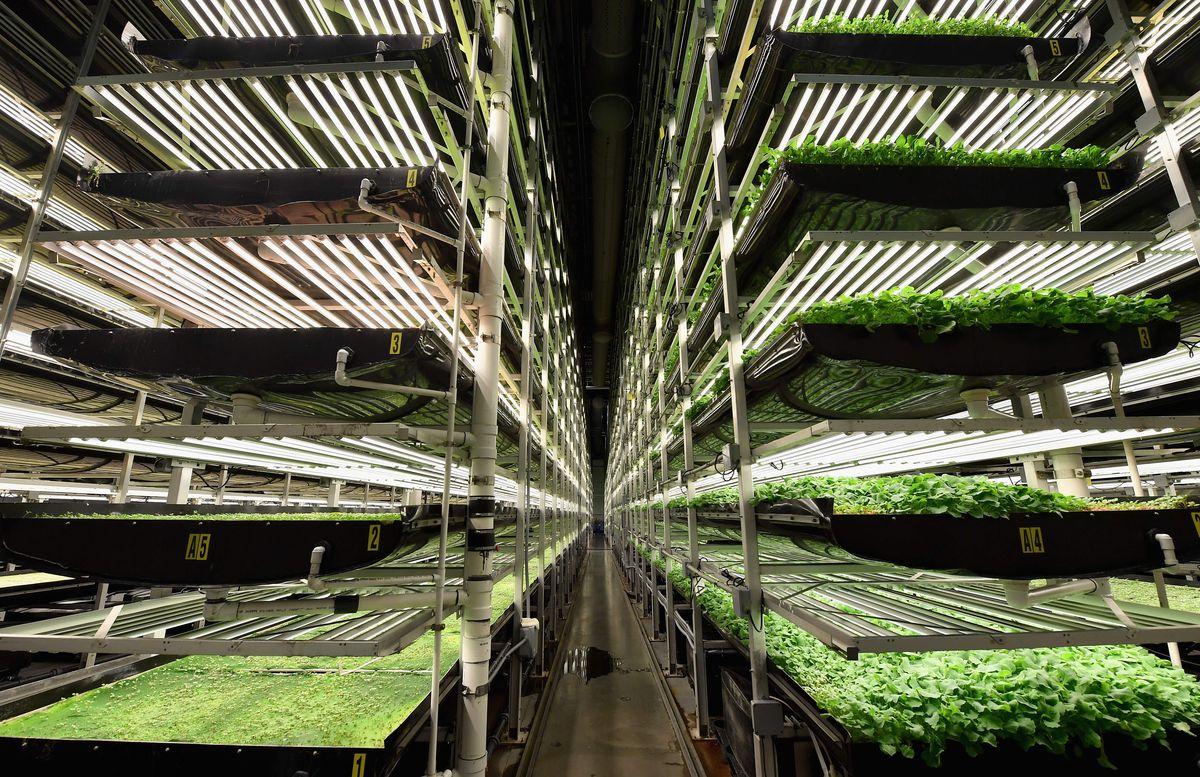 Вертикальные фермы в Индиане